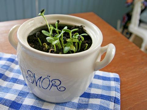 enkla-odlingstips.jpg