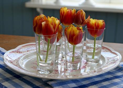 Röda tulpaner nedklippta i korta stjälkar och sen placerade en och en i glas.