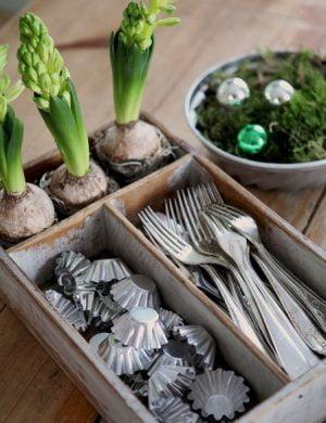 Hyacinter på väg att slå ut samsas med silverbestick i en besticklåda av trä.