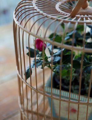 Närbild på fågelbur i trä, innan för står en rosaröd ros i kruka.