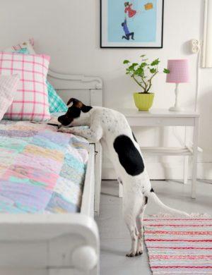 Hunden Melker hoppar upp för att nå saker på nybäddad säng i ljusa pasteller med lapptäcke.