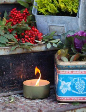 kål , rönnbär och andra höstväxter planterade i plåtburkar runt brinnande ljus på trappa.