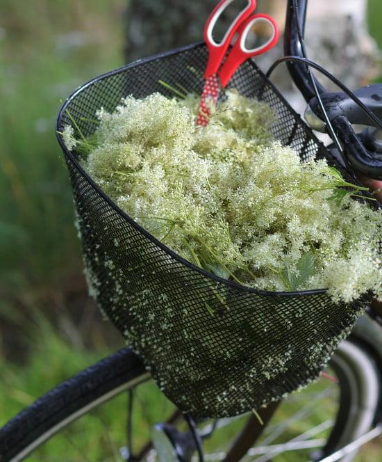 Cykelkorg full av älgört i vitt.