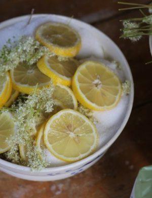 Porslinskål fullproppad med citronskivor och kvistar av älgört.