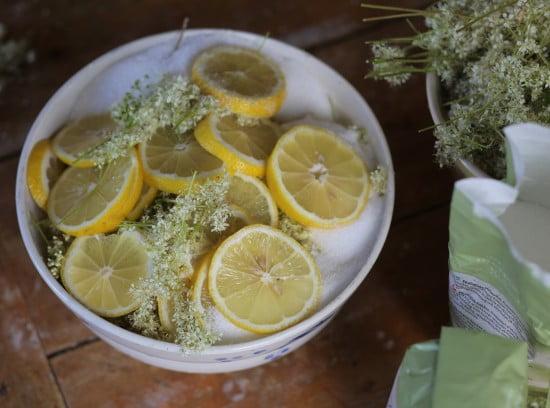 Citronskivor varvas med älgört i skål.