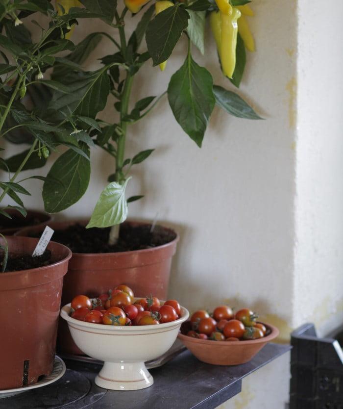 Tomater och chili i gårdbutiken.