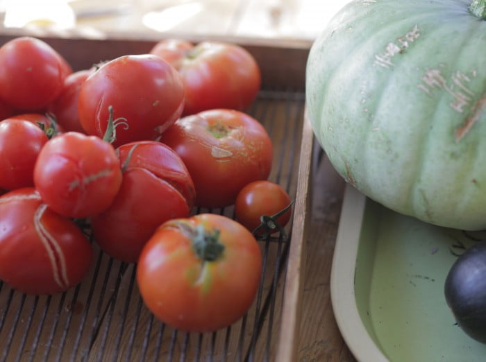 Röda solmogna tomater på galler i form.