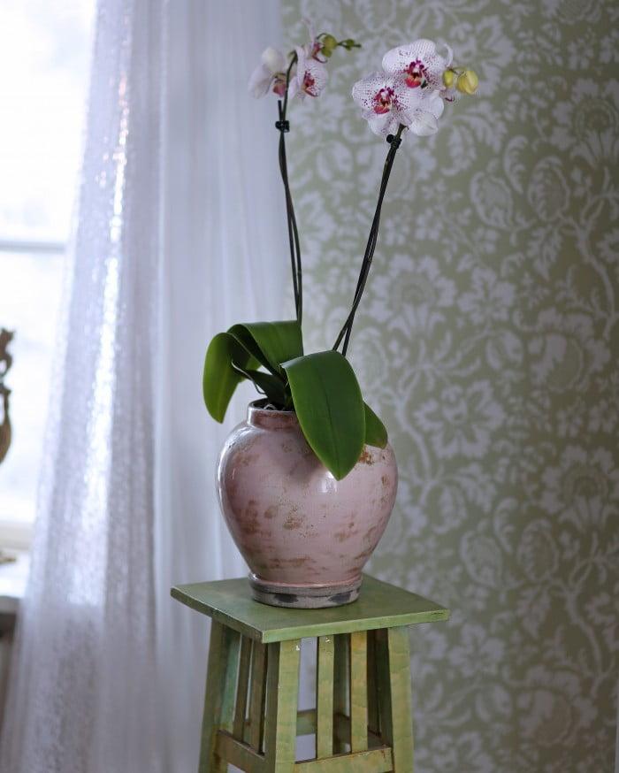 vanliga blommor i hemmet