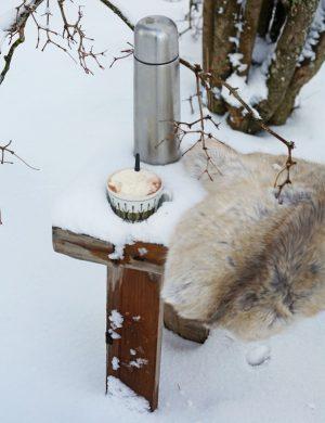 Snöig bänk utomhus på vintern med renfäll och en kopp varm choklad.
