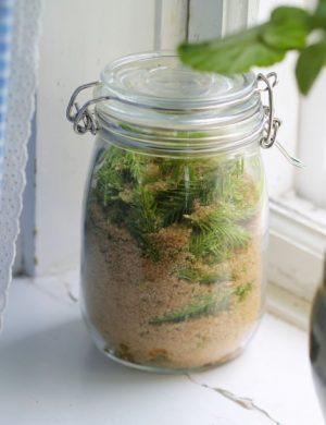 Genomskinlig glasburk står i fönster, fylld med granskott och brunt socker.