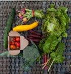 Olika grönsaker uppdukade på bord.