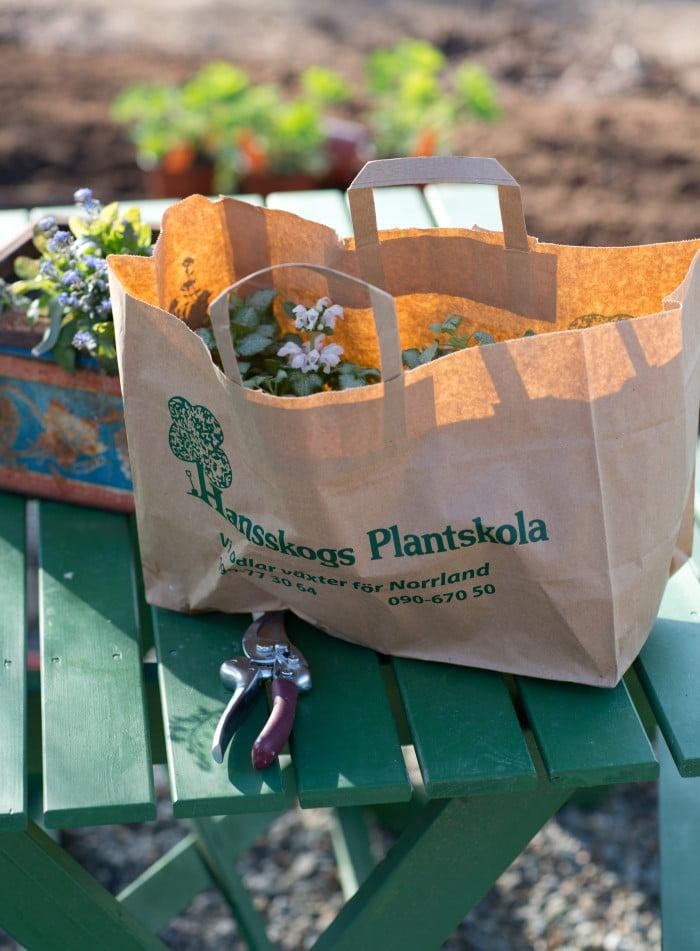 perenner och plantor från hansskogs plantskola
