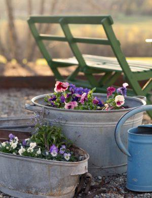Vårsol lyser mot bakstycket av en trädgårdsbänk i trä och intill spelar solen i färgglada vårblommor som planterats i plåtkärl.