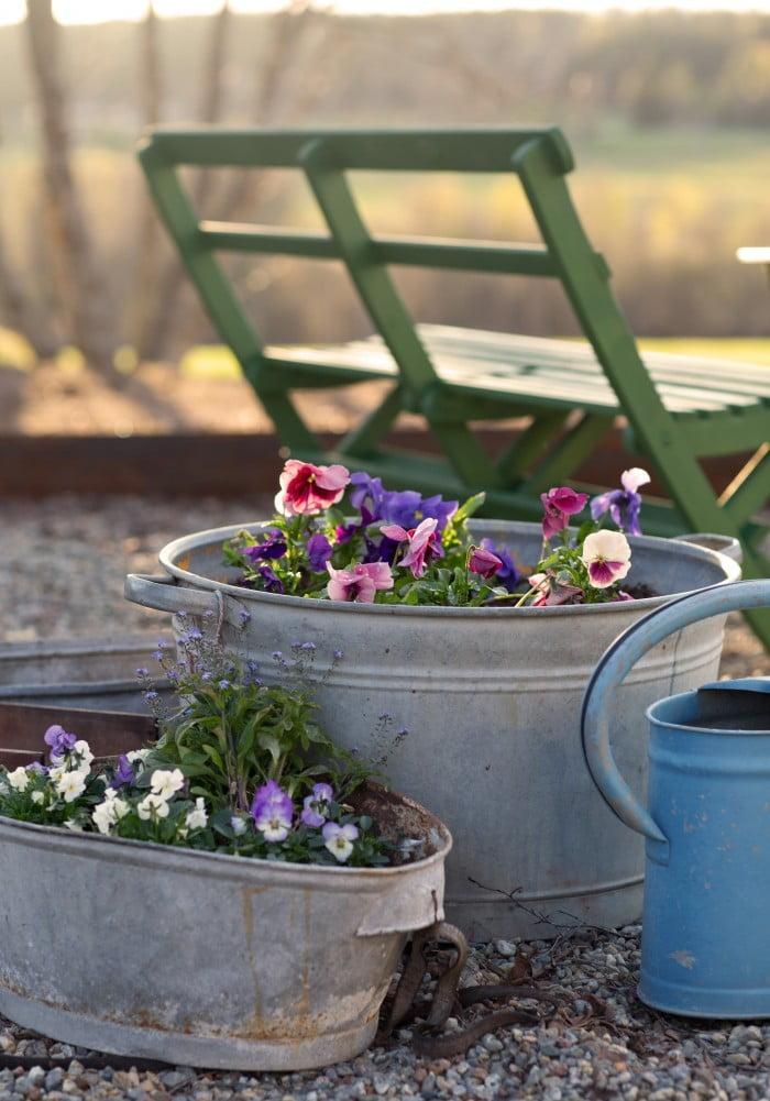 Plantera frosttåliga pensel och förgätmigej