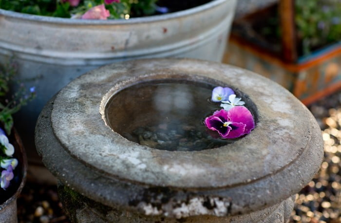 fågelbad i trädgården penseer och vattenblänk