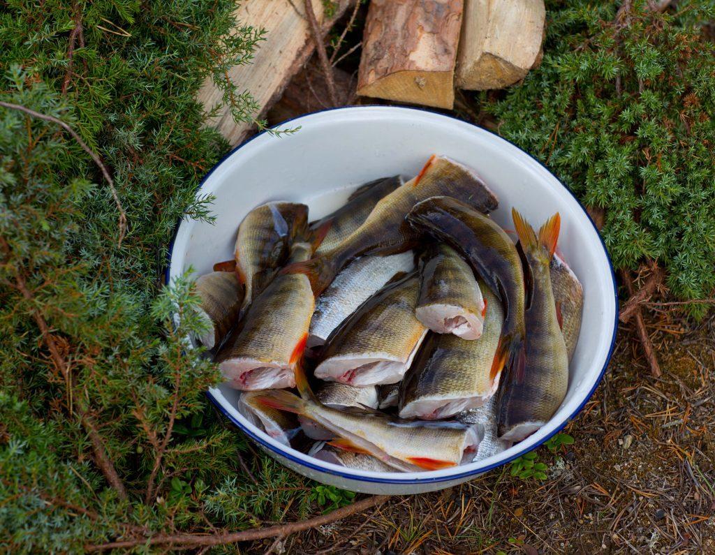 röka-fisk-036A0949-1024x795