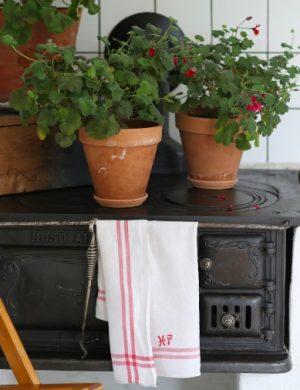 Blommor i krukor står i grupp på järnspis.
