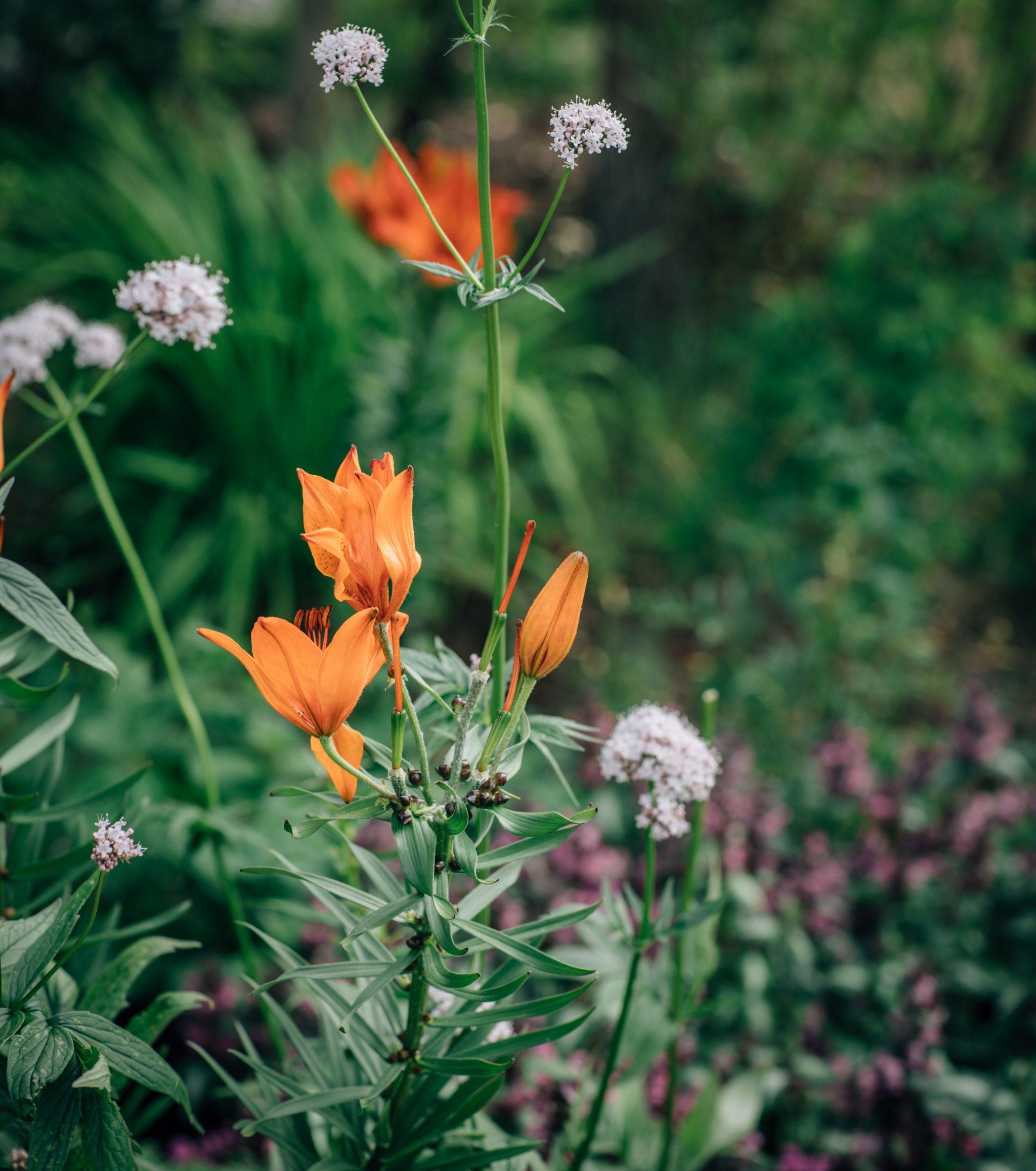 33af99d72e3f Min trädgård - Blommor & Trädgård - UnderbaraClara