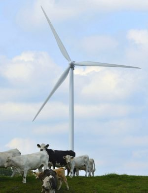 Vindkraftsverks som snurrar med kossor på äng i förgrunden.